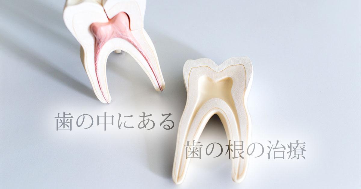 歯の中にある歯の根の治療